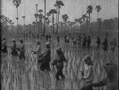 La récolte de riz est un des thèmes favoris de la propagande khmère rouge comme en témoigne cette image extraite d'un film muet tourné sous le Kampuchéa démocratique. (Direction du cinéma cambodgien)
